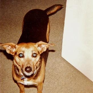 Fanny the Wonderdog